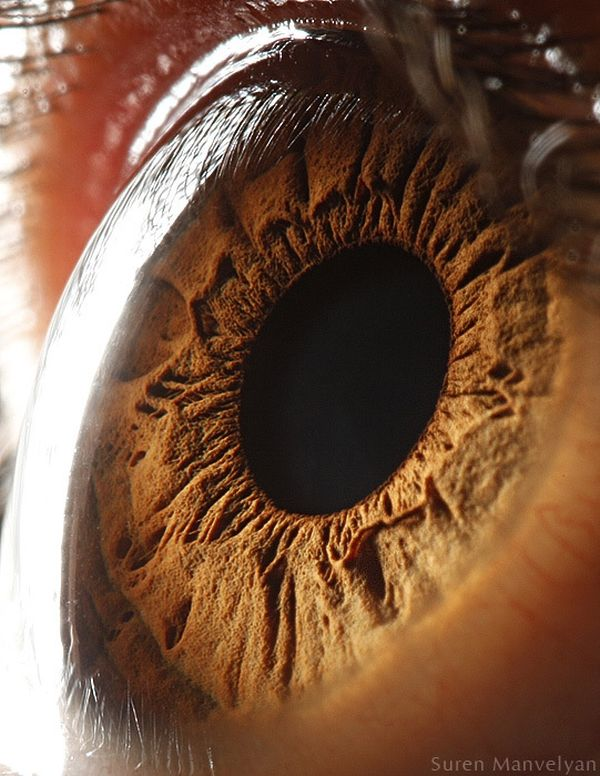 Extreme Close up of Human Eye by Suren Manvelyan
